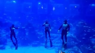 S.E.A. Aquarium, Resort World Sentosa Singapore | Freediving Demonstration