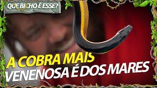 A SERPENTE MAIS VENENOSA DO MUNDO VIVE NO MAR! | RICHARD RASMUSSEN
