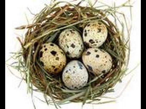 Какие витамины в яйцах? - Ответ ЗДЕСЬ!