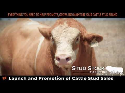 Stud Stock Marketing Services Capability