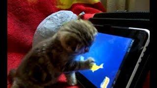 Топ смешных приколов с котами - любители планшета