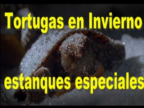 Estanques de invierno para tortugas youtube for Estanque artificial para tortugas