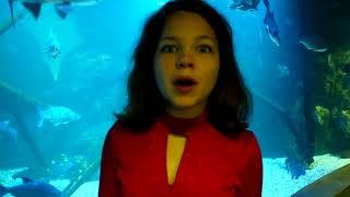 Смотреть видео Влог Океанариум Крокус Сити Куда сходить в Москве #НастяиВова знают онлайн