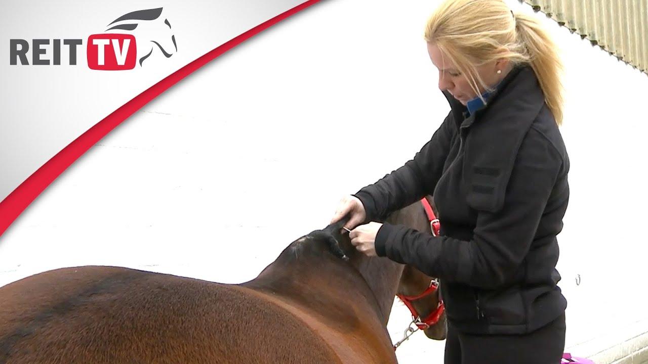 Pferdefrisuren Mähne Einnähen Wir Zeigen Wie Es Geht Youtube