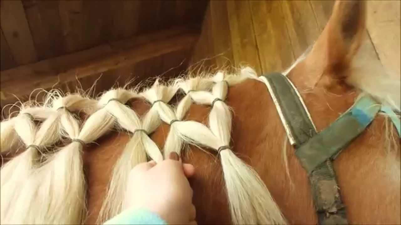 Die Top 5 Frisuren Für Mähne Und Schweif Fürs Pferd Teil 1 Youtube