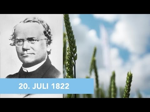 20. Juli: Happy Birthday, Gregor Mendel