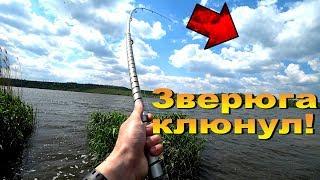 Нашел место, где дикие толстолобы разгибают крючки и рвут снасти!Рыбалка