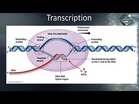 Pastor Mike Online 09-29-16, Mental Disorders, Genetic Engineering And DNA