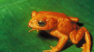 Animal Classifications Amphibians, birds, Reptiles, Mammals, insects, & fish