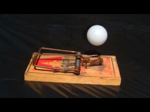 Download Youtube: Rat Trap vs Ping Pong Ball at 5,000 fps - Slow Mo Lab