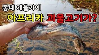 [오브리더] 동네 개울가에서 아프리카 괴물 물고기가?? 이건 또 누가....