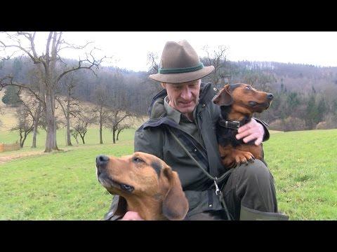 Tiroler Bracke: Freund und Jagdhelfer