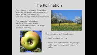 Why Mason Bees?