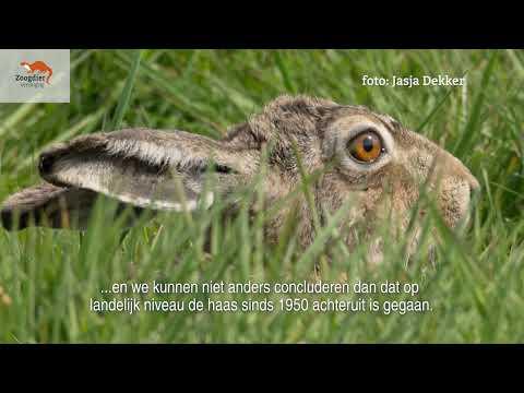 Rode Lijst: Haas en konijn