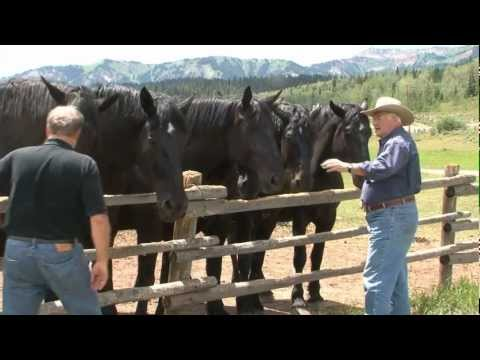 RFD TV Gentle Giants' features Jackson Fork Ranch