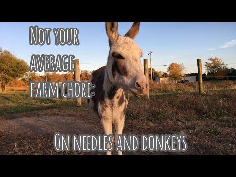 NOT Your Average Farm Chore: On Needles and Donkeys