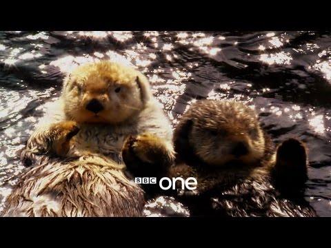 Animals in Love: Trailer - BBC One