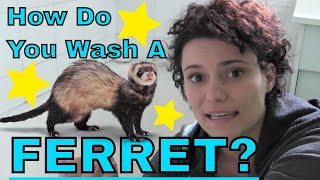 How do you wash a ferret? - www.Ferret-World.com