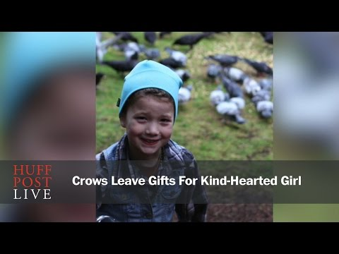 Crows Leave Gifts For Kind-Hearted Girl