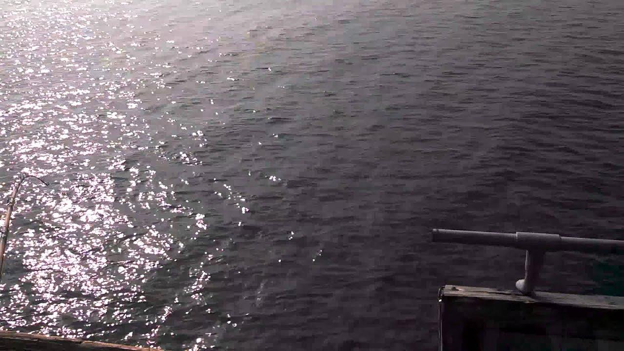Ventura pier fishing omar hooks a great white shark and for Ventura pier fishing