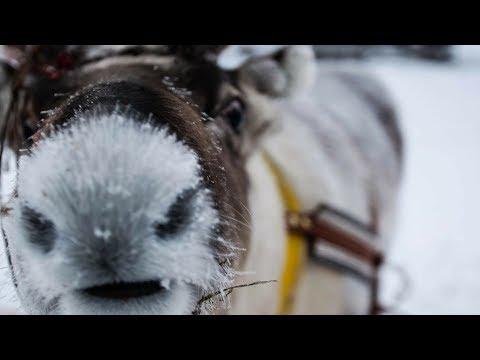 Reindeer Safari & the BEST of LAPLAND!! Northern Lights & Drone - Finland Travel Vlog 4