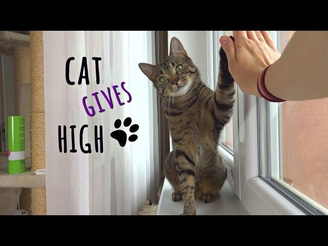 Cat Jonasek gives HIGH FIVE !