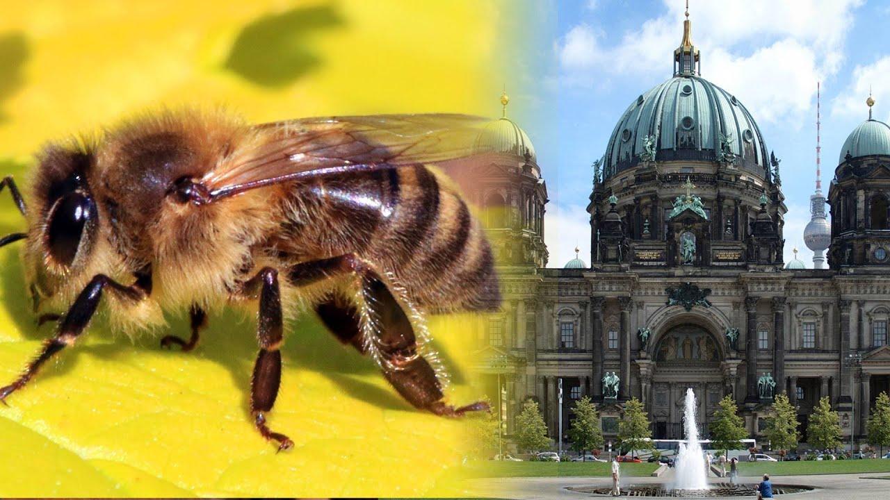 Der Bienenzüchter