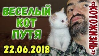 ВЕСЕЛЫЙ КОТ-ПУТЕШЕСТВЕННИК ❖ КОТОЖИЗНЬ! 22.06.2018