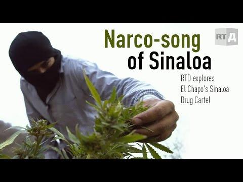 Narco song of Sinaloa. RTD explores El Chapo's Sinaloa ...