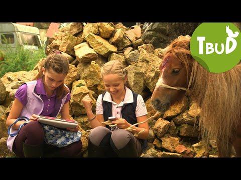 Ponyhilfe.de (Folge 46)   Tiere bis unters Dach   SWR Kindernetz