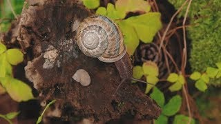 Snail on Wooden in Rain Forest  | Stock Footage
