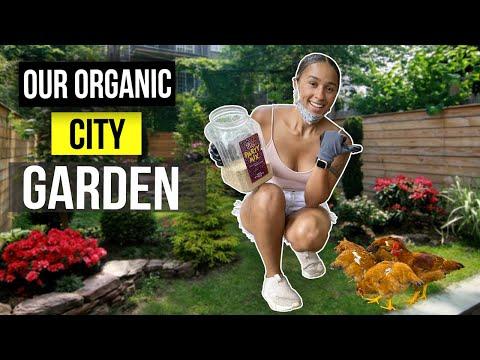 Backyard Organic Gardening in Boston City   Urban gardening