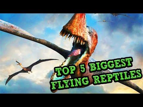 Top 5 BIGGEST FLYING REPTILES!