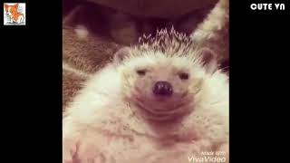 ►Funny And Cute Animals Videos Compilation 2016 [HD] #3 - Cute VN
