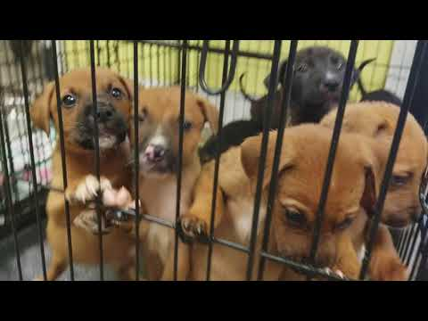 PUPPIES AT JACKSON COUNTY ANIMAL SHELTER IN GAUTIER, MS