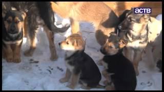 Неравнодушные сахалинцы продолжают спасать собак от живодеров