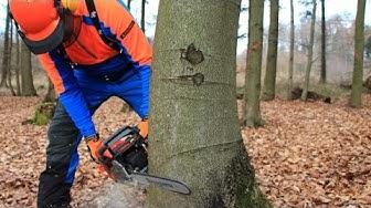 Baum fällen - sicher und richtig, Teil 1: Grundlagen