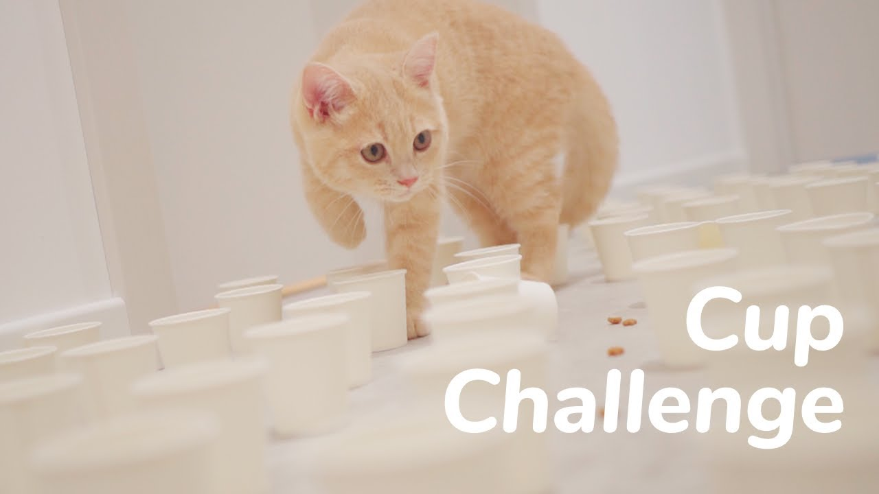 Kittens 100 Cups Challenge - Day 86 @ Baby Kittens Day 1 to Day 100 Lucky Pawison Vlogs