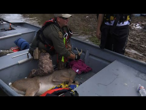 People, Wildlife Scooped Up in Texas Rescues