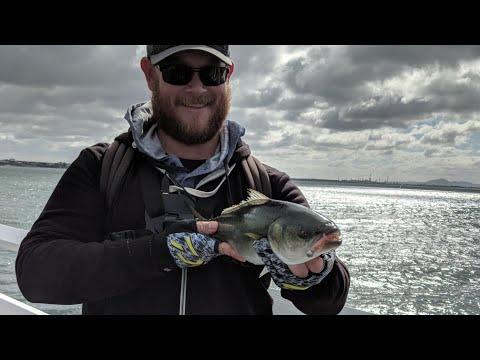 Fishing The Geelong Waterfront - ( Victoria - Australia )
