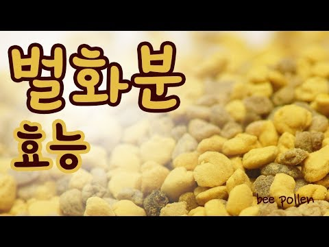 [Bee pollen] 벌화분 효능 천연 영양제 비폴렌 l �