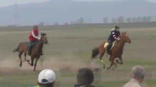 Скачка Беспородные лошади- Райкова 2016  (Лошади-Horse–Animal-racing-конь-смотреть-онлайн-бега)