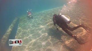 Open-ocean fish farmer: Future of food