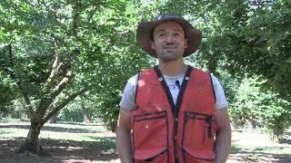 Successes in Organic Hazelnut …