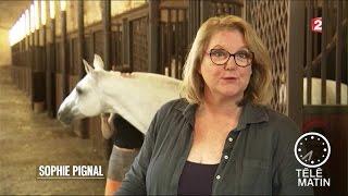 Emploi - Equicoaching, le cheval pour réveiller sa personnalité
