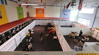 Healthy Hound Playground Virtual Tour - Northern VA Dog Daycare, Boarding Kennel & Grooming Salon