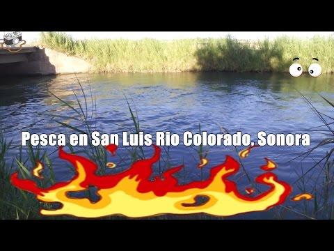 Pesca en el canal de San Luis Rio Colorado