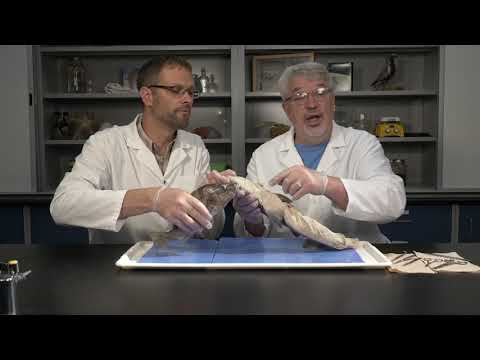 Best Dogfish Shark Dissection: Part I - External (Jr. High, High School And College)