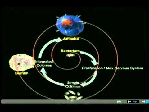 Dr Bruce Lipton @ Birth 2012 (napisy PL) 1/6