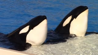 One Ocean (Full Show) at SeaWorld San Diego on 6/17/15